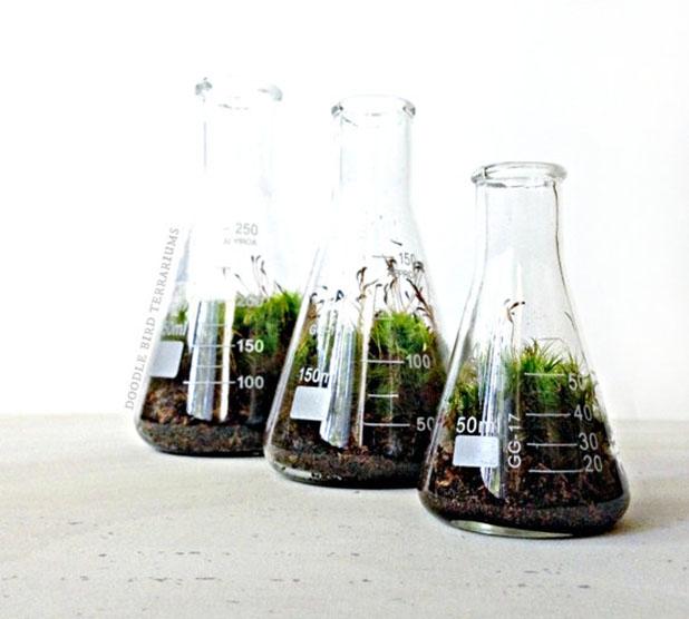 Erlenmeyer terrarium